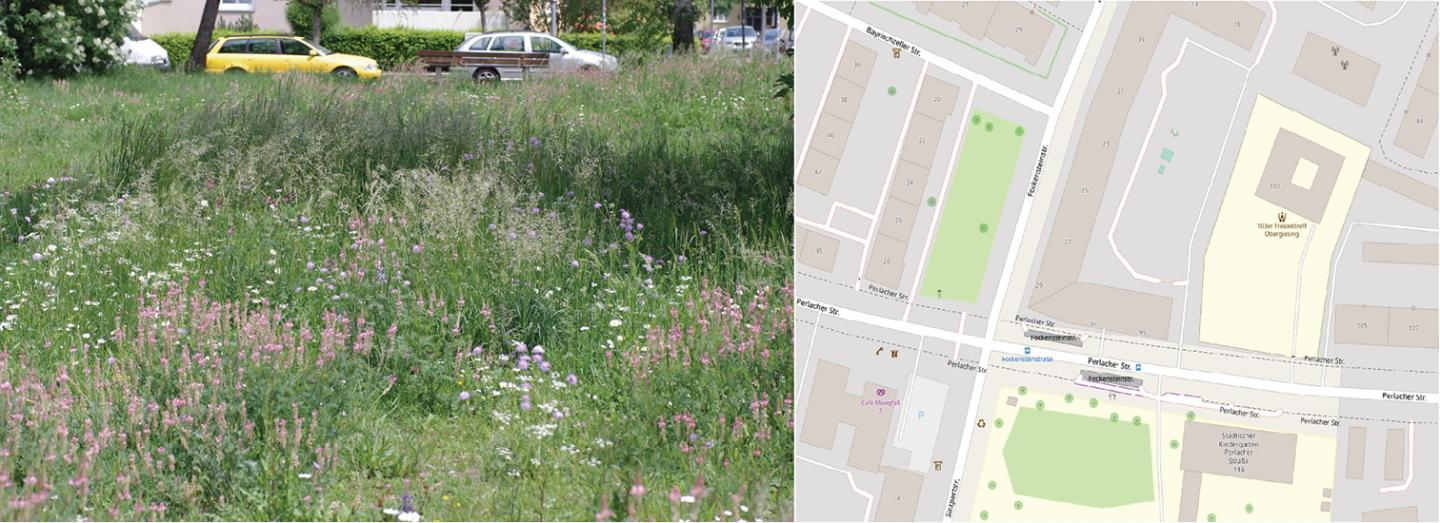 The flower strip at Fockensteinstraße as an example of the urban context of the flower strips studied here.