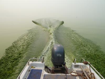 Toxic Algal Bloom