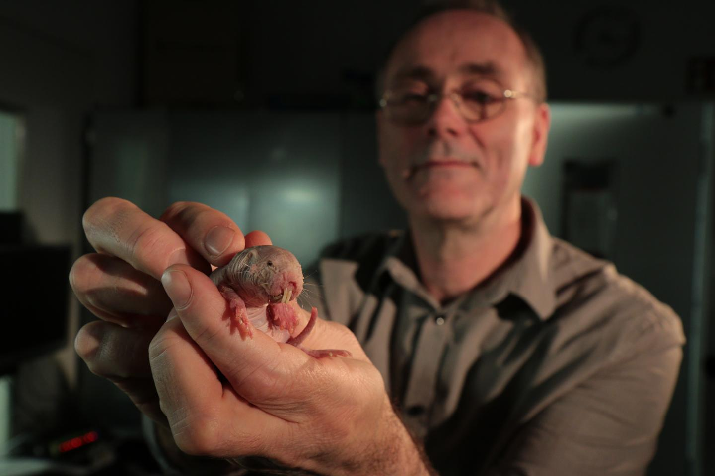 Prof. Gary R. Lewin Holding a Naked Mole-Rat