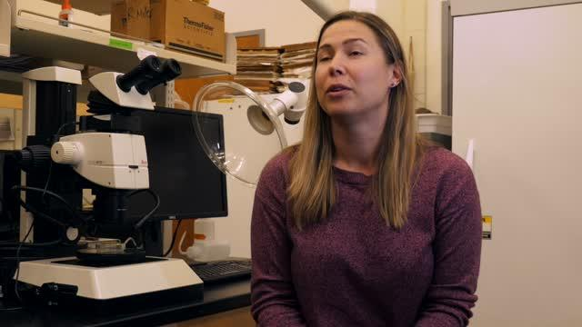 Microplastics Found in Oysters, Clams on Oregon Coast (Without B-Roll)