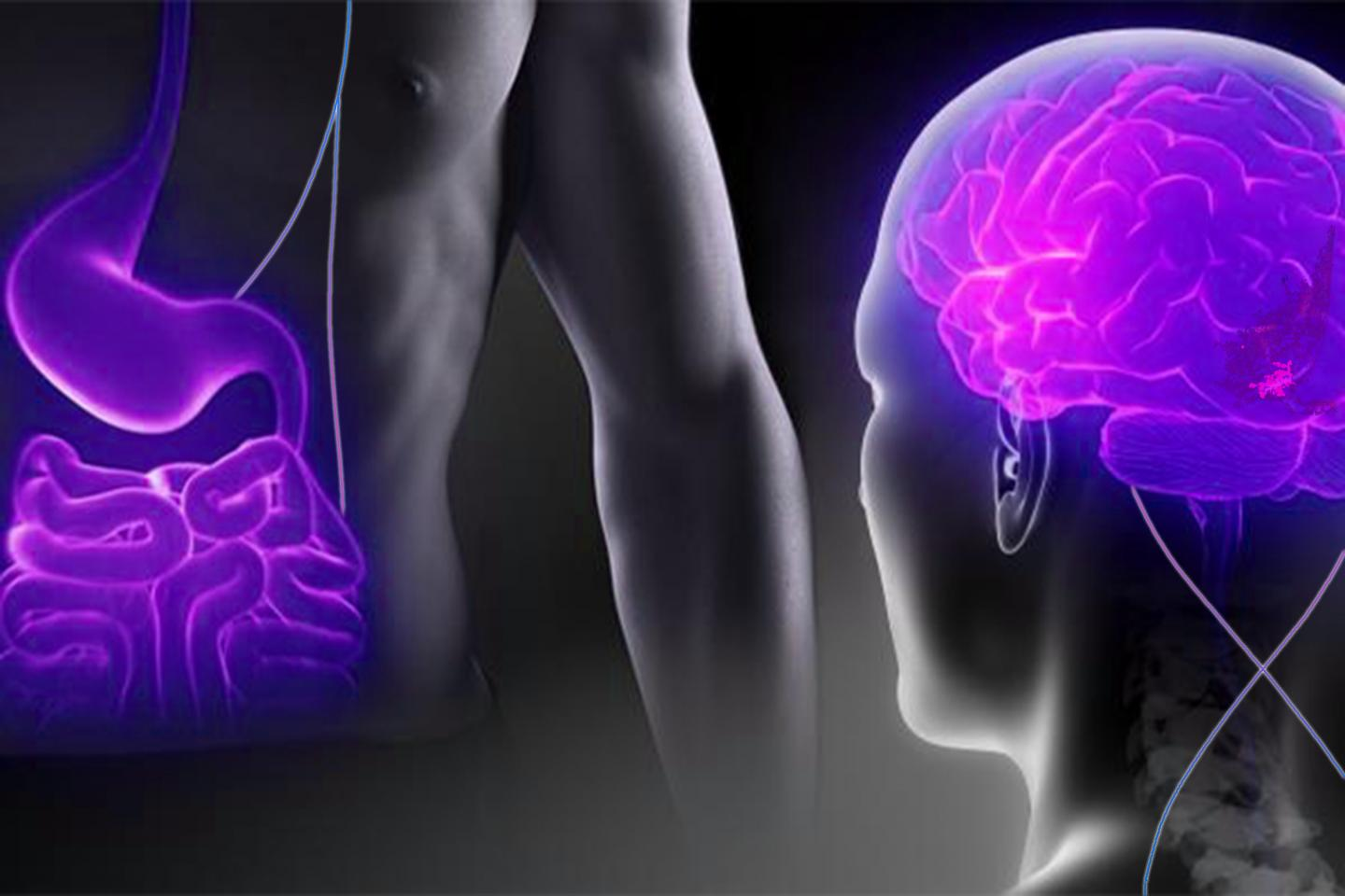 Gut-brain Connection to Silence the Hunger 'Alarm System'