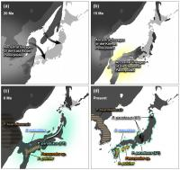 A Scheme of Evolutionary History of the East Asian Panorpodes Scorpionflies