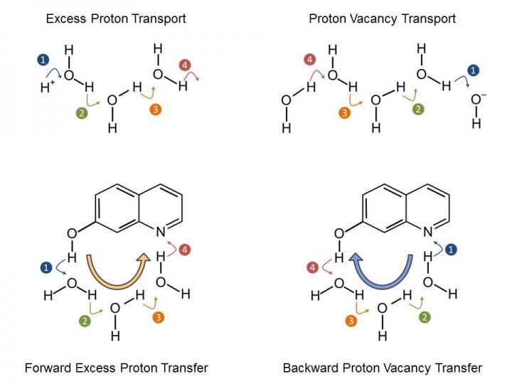 Proton Transport