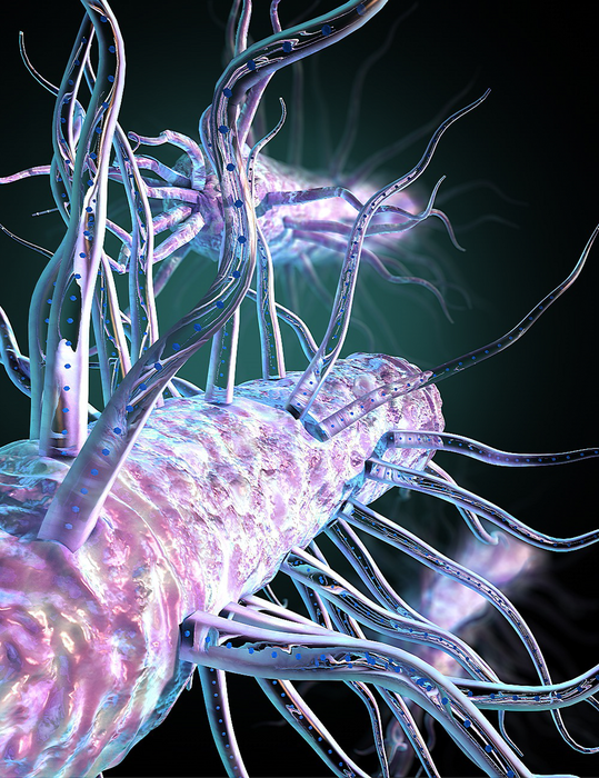 Hidden bacterial hairs power nature's 'electric grid'