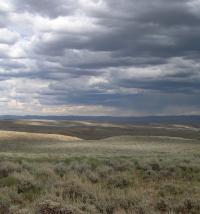 Landscape of Field Site