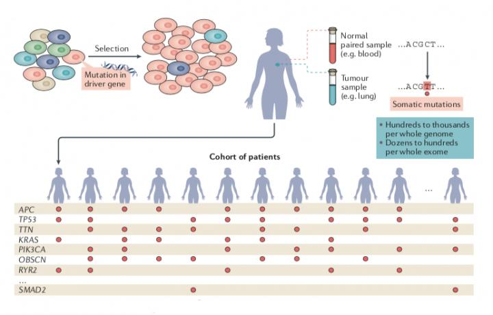 A Compendium of Mutational Cancer Driver Genes