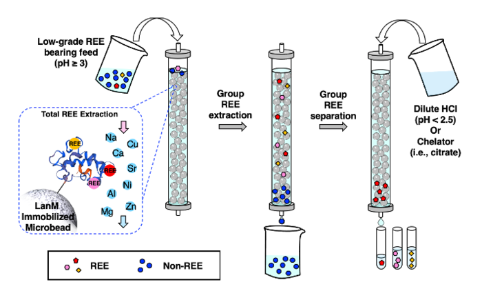 REE separation and extraction method