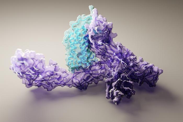 Protein prediction structure