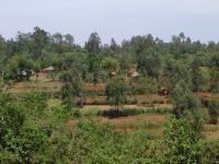 Sauri Village Cluster