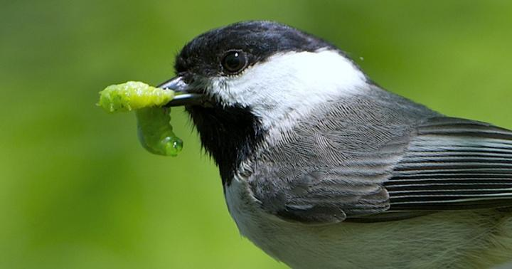 A Bird and Its Food Source