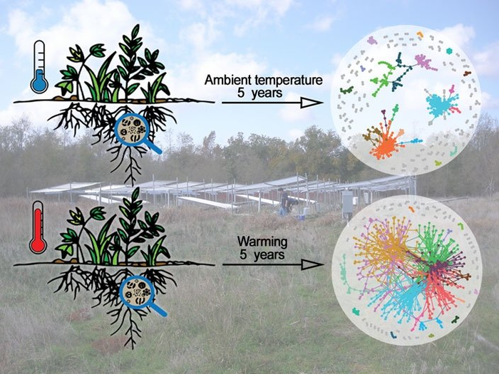 Researchers monitored tall grass prairie soil microbial communities as part of a 5-year global warming study. Experimental warming of soils caused microbial communities to form more complex network structures compared to unwarmed control soils.