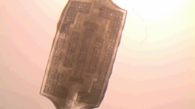 Heart Tissue Beats on Scaffold