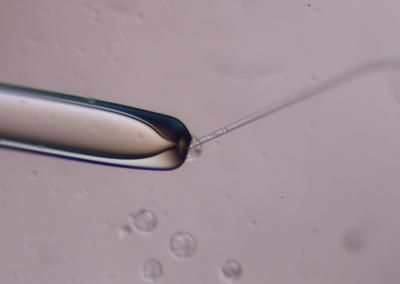 Creating mouse-human chimeric embryos