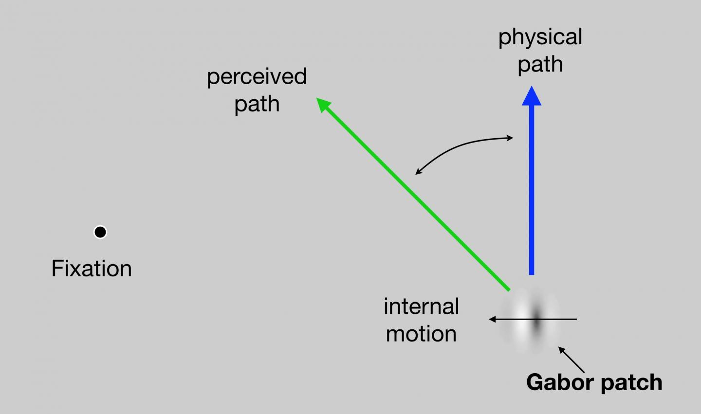 Difference between the Perceived (Illusory) Path Versus the Real (Physical) Path of the Gabor Patch