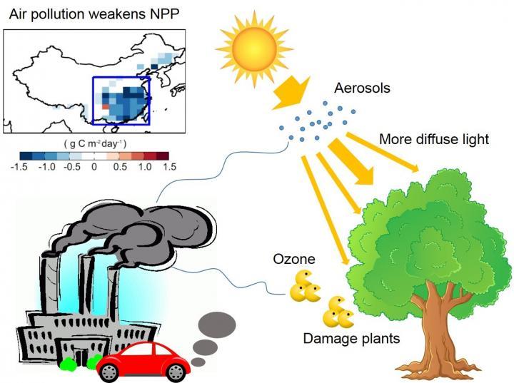 Anthropogenic Emissions