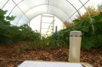 Pesticide Threatens Future for Key Pollinator