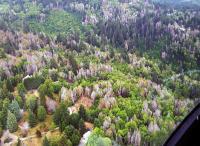 Sudden Oak Death in Oregon