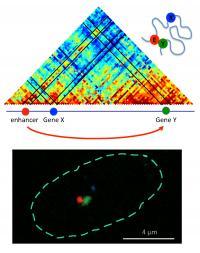 Relative Distance Between Genes