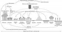 CML Diagram of Human-Environment Dynamics