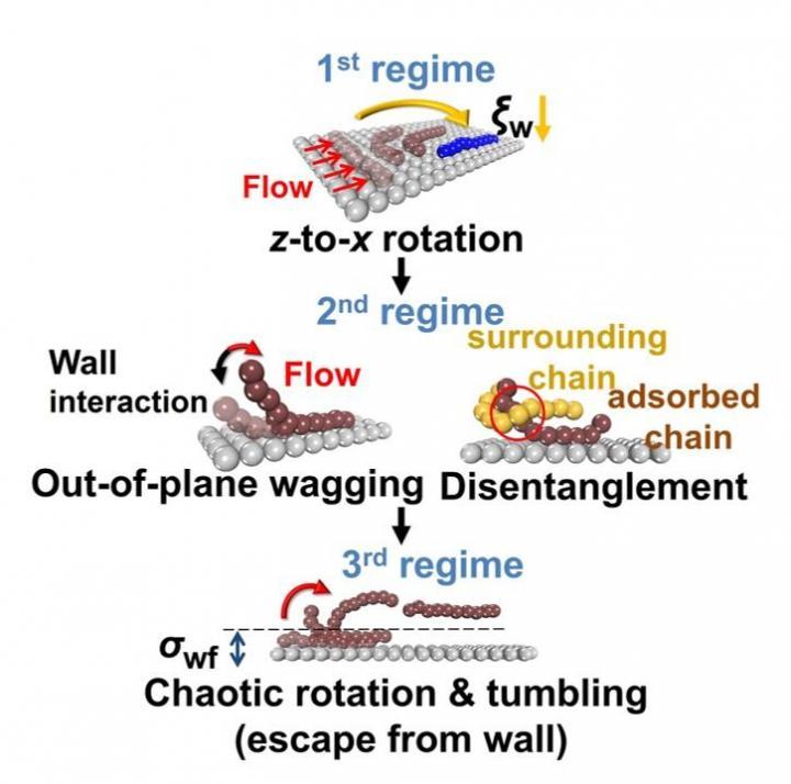 Professor Chunggi Baig's Research