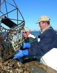 Men Unloading Oysters on a Boat