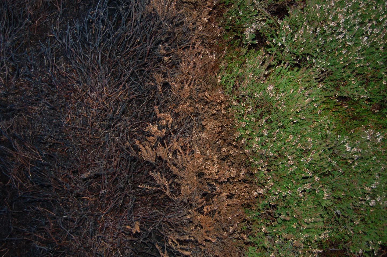 Moorland Burning