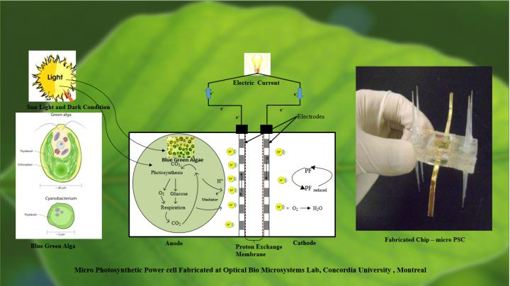 Anatomy of Micro Photosynthetic Cell