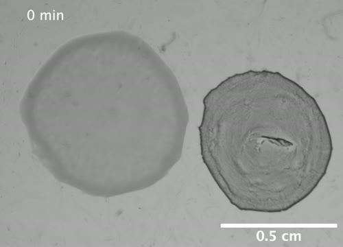 Bacteria Vs Phage - Study by Diana Fusco Lab