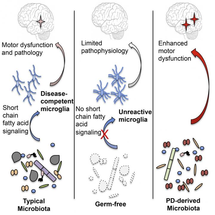 Microbes in Mouse Model of Parkinson's