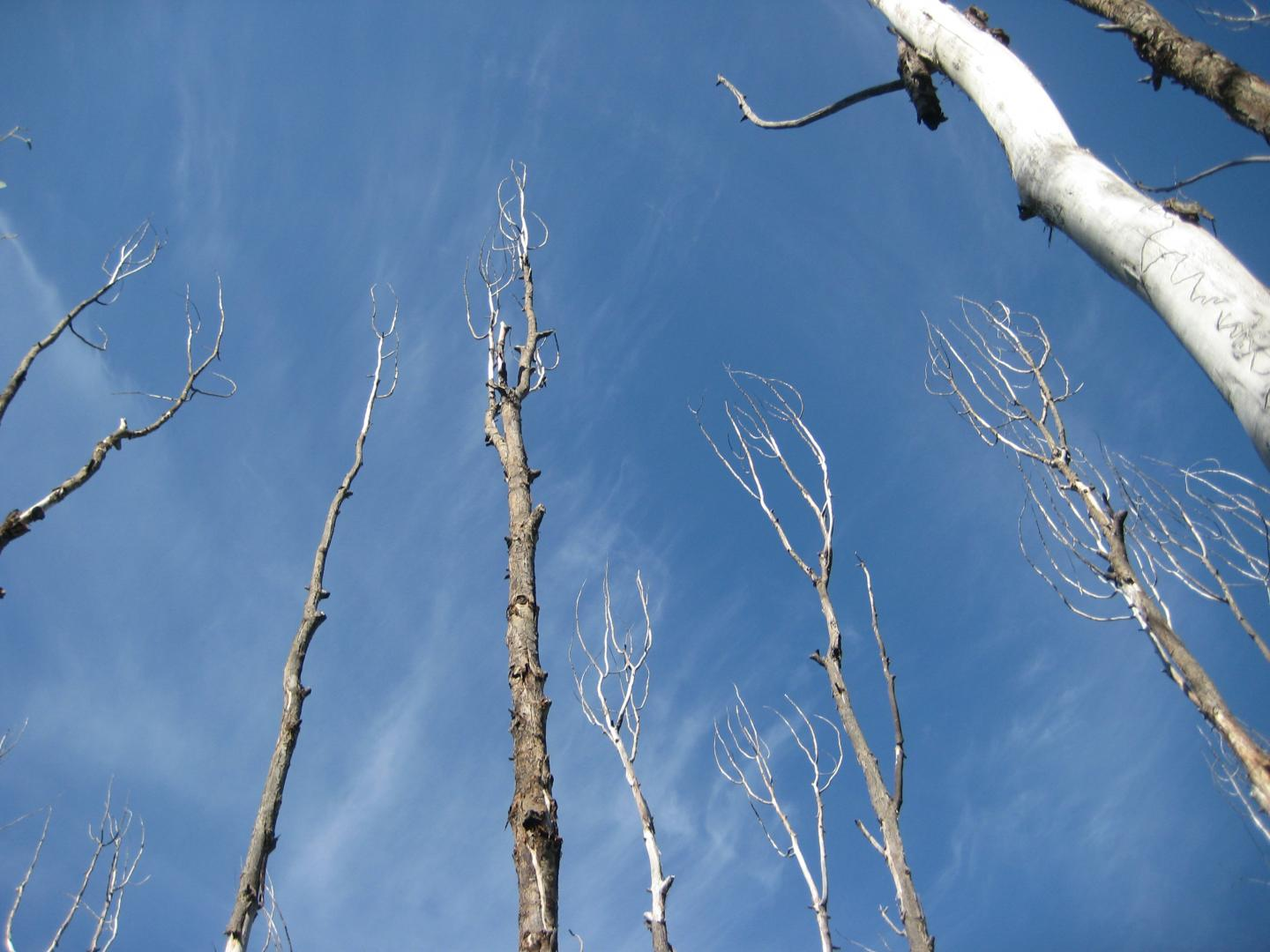 Drought-affected Trees