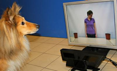 Dogs Read Our Intent