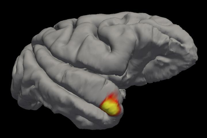 Memory Neuron Cells