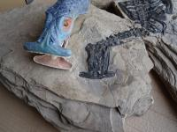 Fossil and Reconstruction