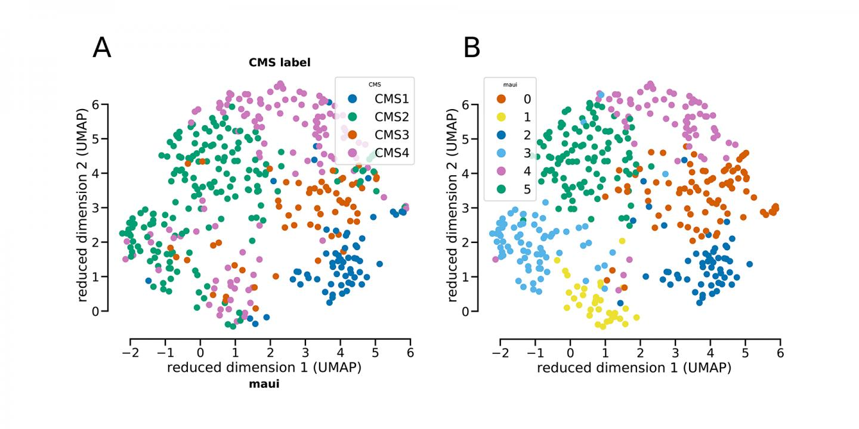 Subtypes of Tumor Samples
