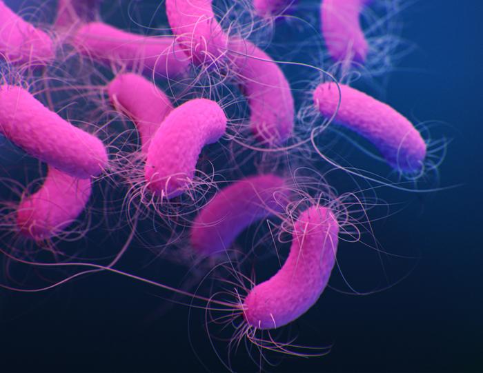 Medical illustration of multidrug resistant P.aeruginosa © CDC/Jennifer Oosthuizen