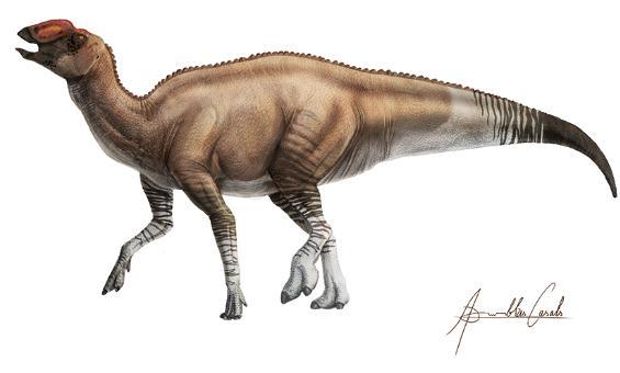 <em>Aquilarhinus Palimentus</em> 2