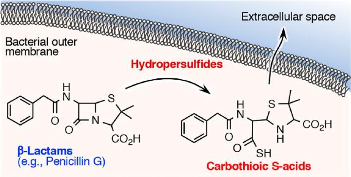 β-lactam antimicrobial agent degradation by reactive sulfur species and formation mechanism of carbothioic acid