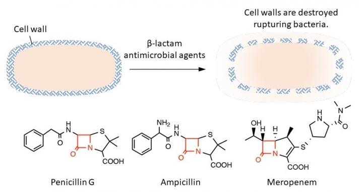 Bactericidal action of β-lactam antimicrobial agents