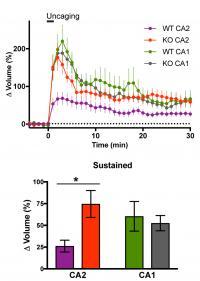 RGS14 Suppresses CA2 Spine Structural Plasticity