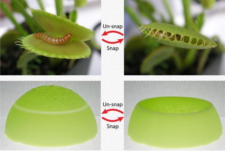 Materials Advance Inspired by Snapping Ability