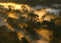 Amazon Forest canopy at dawn in Brazil