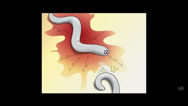 Fearful Worms May Help Humans with Anxiety