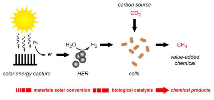 Hybrid Artificial Photosynthesis for Making Molecular Hydrogen