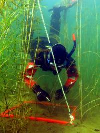 A Survey of Underwater Vegetation