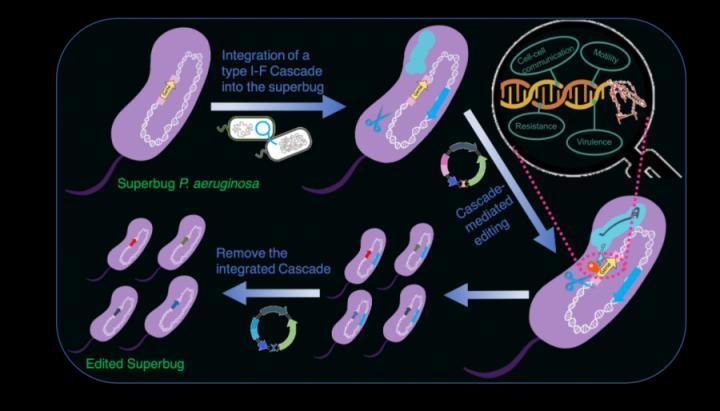 type I CRISPR Cascade-mediated editing