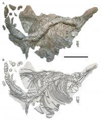 Holotype of sea reptile