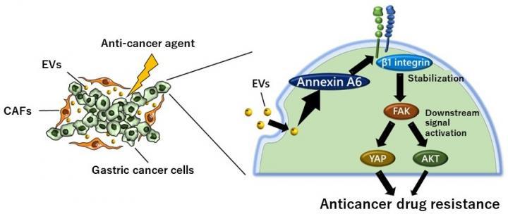 Anticancer Drug Resistance Mechanism