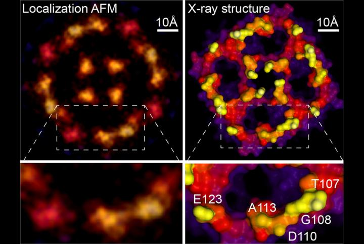 Localization AFM & X-ray structure