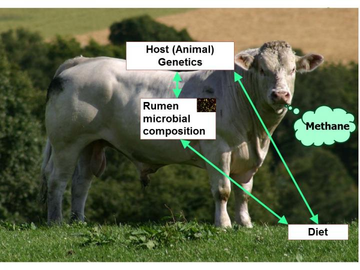 Research to Breed More Climate-Friendly Cattle Selected for PLOS Genetics Research Prize