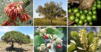 Wild African fruits can supplement low protein foods with lysine